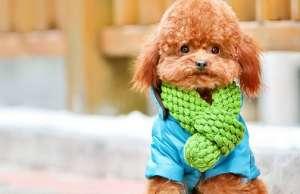 爱犬驯养攻略(4)